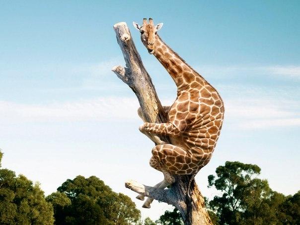 О «Муравьях», «Жирафе» и Суде.