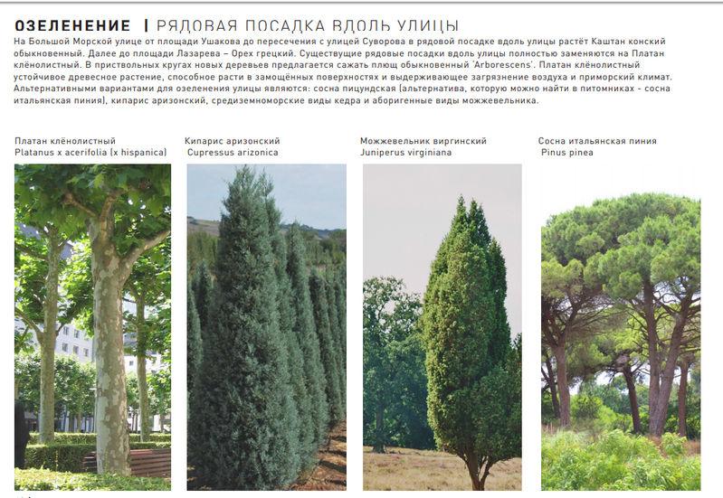 """Как и на каких основаниях на Большой Морской будут менять """"95% больных"""" отечественных деревьев на иностранные?!"""
