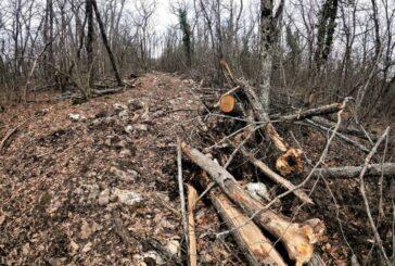 Вблизи одного из маршрутов Большой Севастопольской тропы обнаружили вырубку деревьев